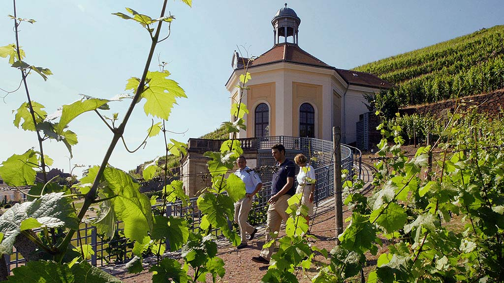 The Saxon state vineyard Schloss Wackerbarth cultivates its choice grapes on the sunny hillsides along the Elbe River.